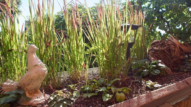 Bont Gartenbau –Dauerhafte Balkonbepflanzung